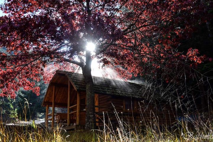 Cozy Rustic Cabin # 119~Oakenshield's Castle