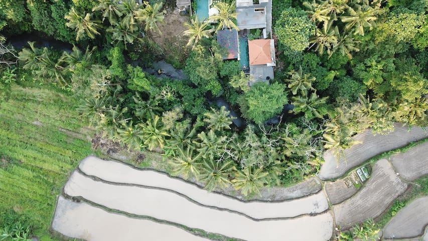 bird eye view, our place surrounding by trees and rice fields