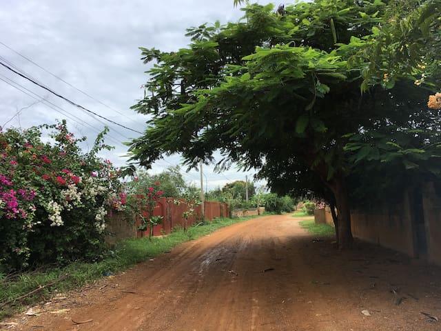 Route des aigrettes après la pluie