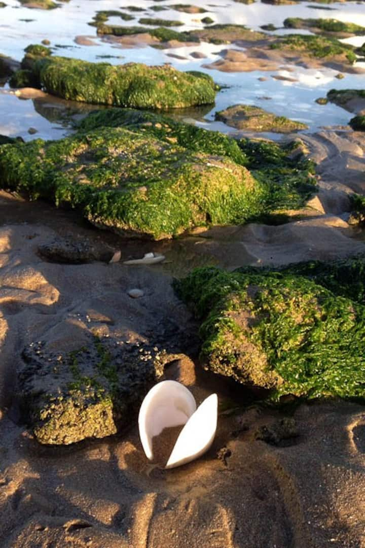 Experience Tide Pool Eco-Systems