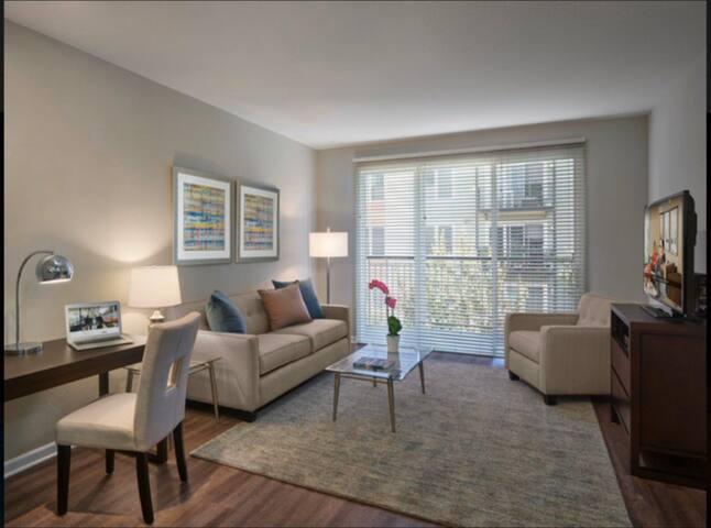 1 Bedroom Bay Street Apartment