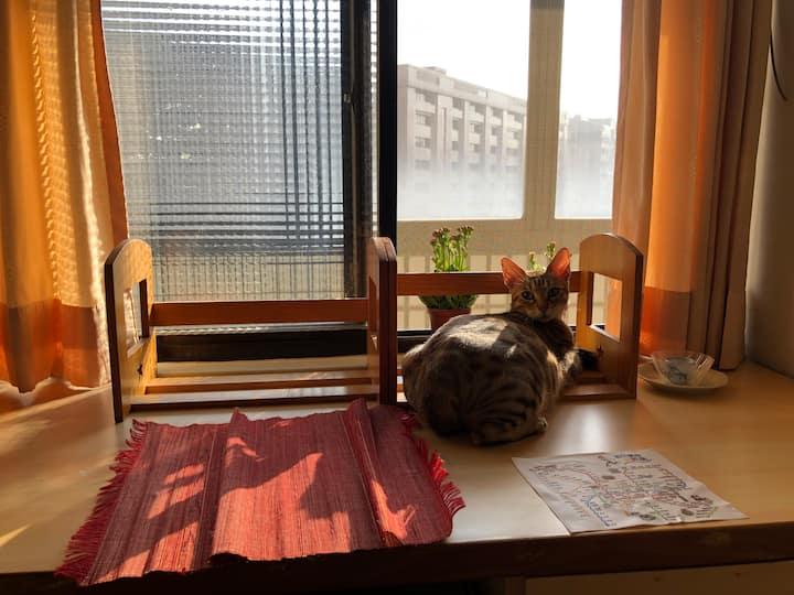 Cat Petting House貓咪摸摸茶