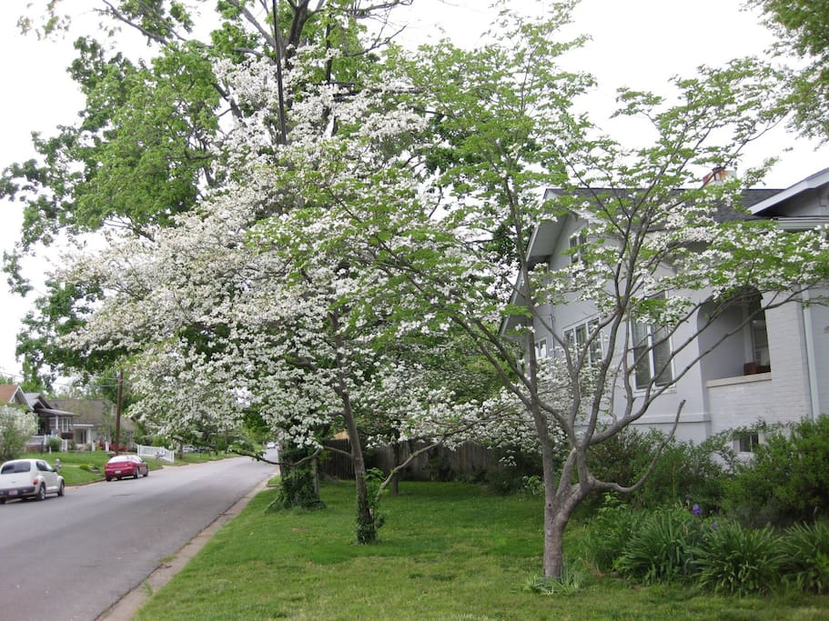 Side Yard/Dogwoods