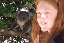 Our resident koala who visits every few days, especially in the hot weather when she's looking for a drink.