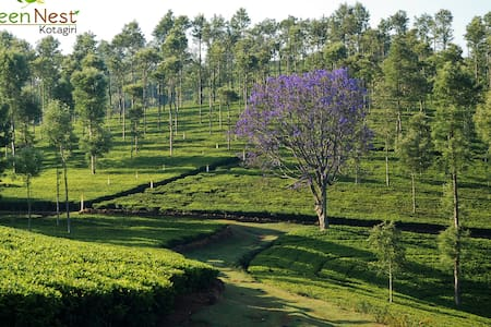 Look deep into nature at Green Nest - Kotagiri