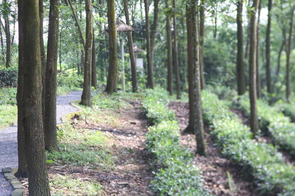 Gardens surrounding Tea Hill house