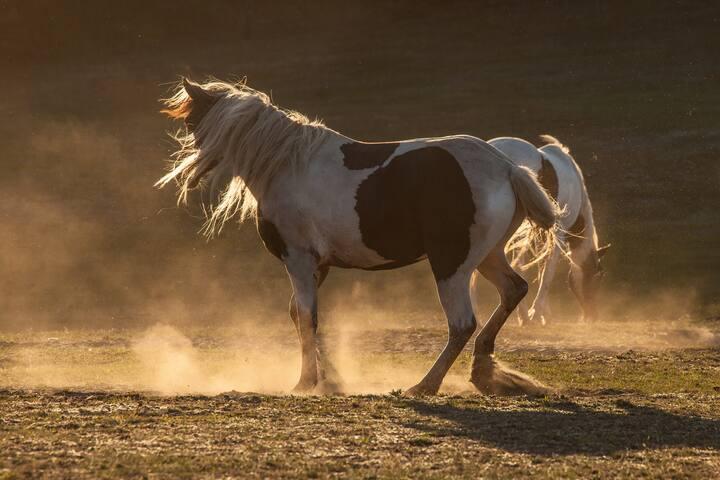 Auf die Pferde- fertig los !