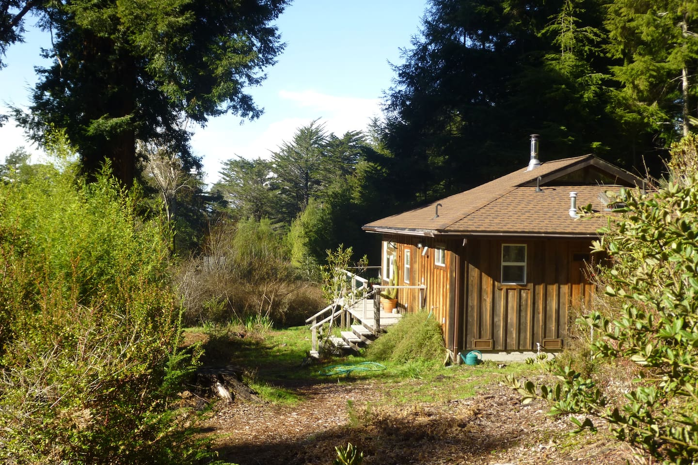 Sunny cottage amid redwoods and rhododendrons