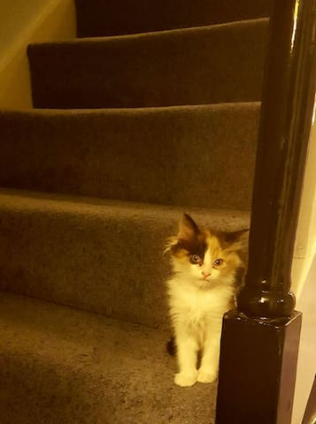 Tiger on the second flight of stairs. A bit bigger now but loves our guests.