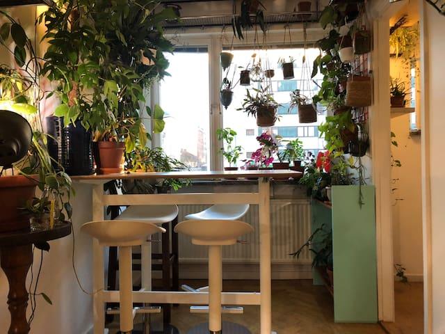 appartement studio central