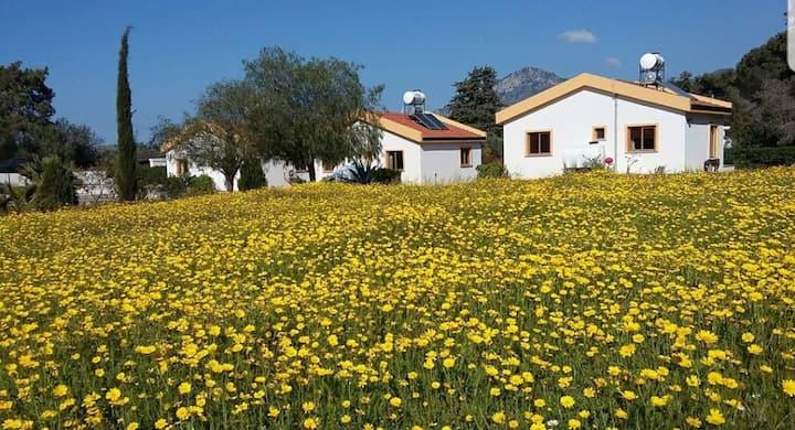North Cyprus, Camlibel,  Oleanders Cottage