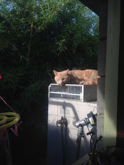 Dutsy the cat enjoying the hot water sevice