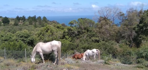 Trees and Seas glamping on farm with animals
