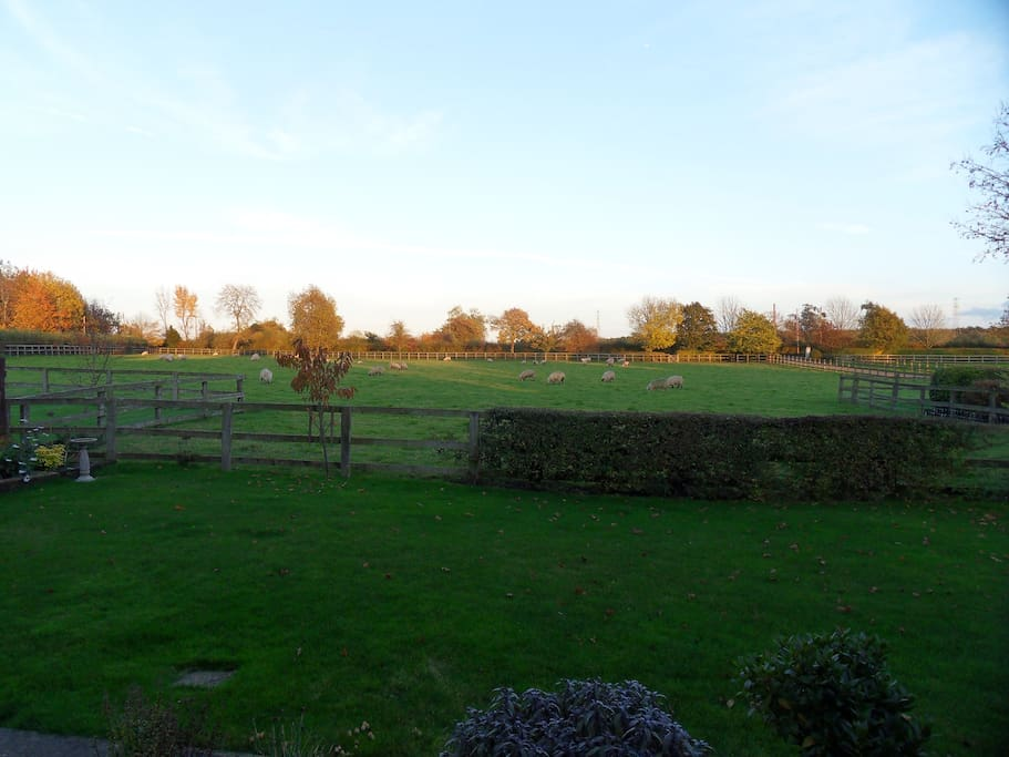 View from back garden, with some neighbours