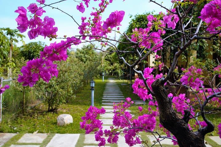 Spring Garden Homestay 3 - tp. Phú Quốc