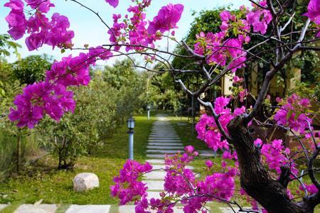 Spring Garden Homestay 3 - tp. Phú Quốc - Bungalow