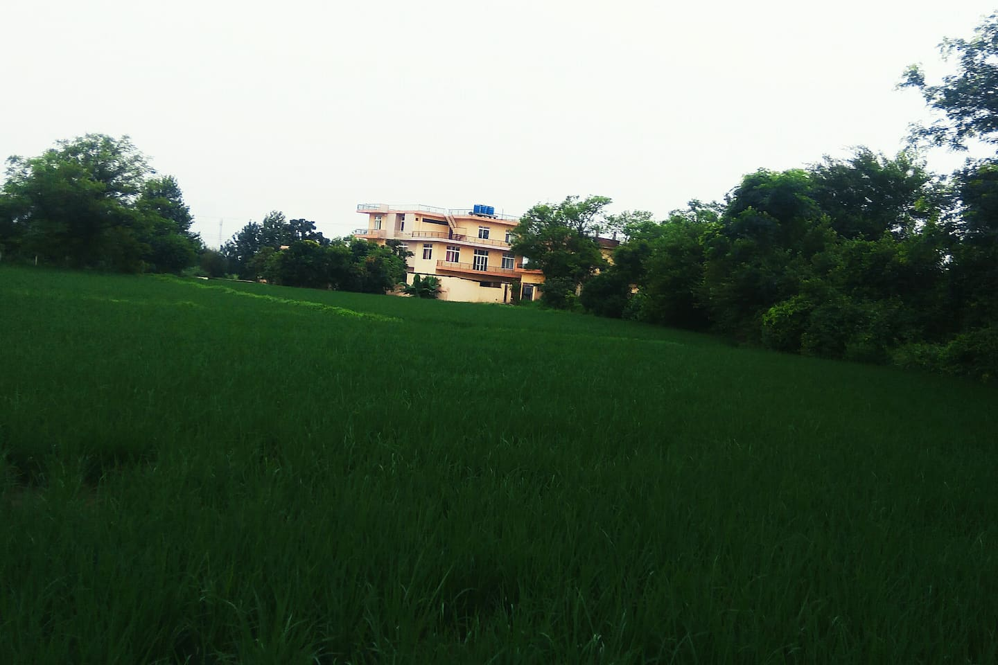 Outside view of Saini Farm House from nearby field. Building is situated in 35 Acre Agri Farm in Village Khalidpur 3.5 Kms from Ropar. Best for peaceful stay.