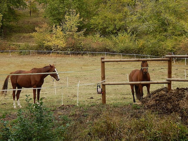 Le Moulin des cavaliers
