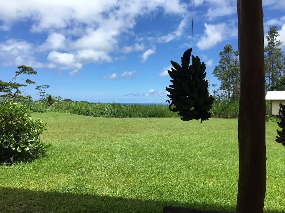 View from the Common Room Lanai