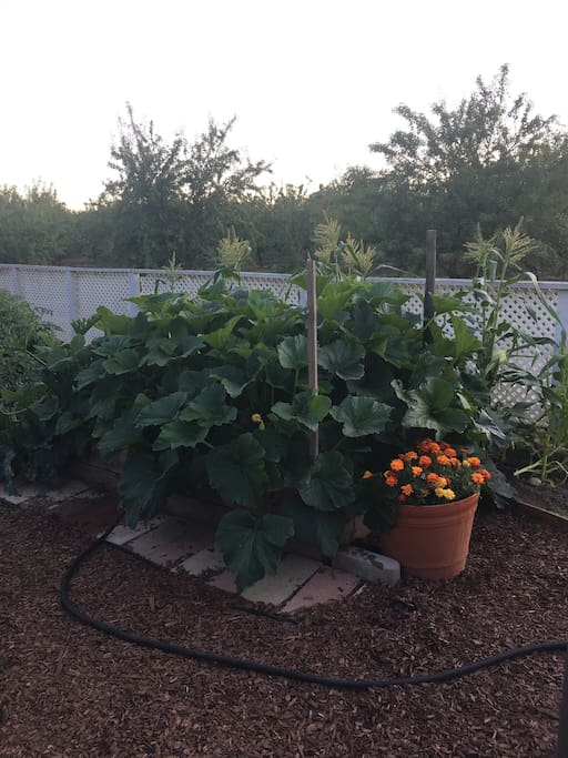 Our overflowing garden!