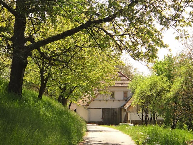 Spacious holiday lodge with fruit tree orchard - Brestovec - 獨棟