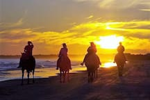 Ride Horses Right on the Beach