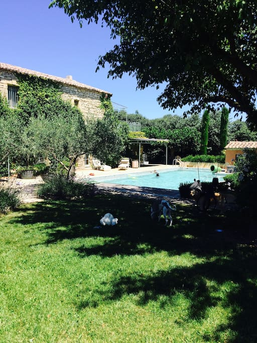 Garden with olive trees and salt-water pool
