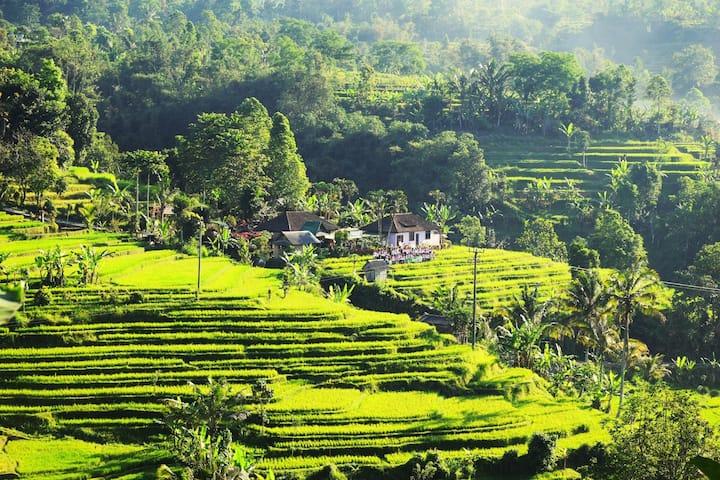Suweden Homestay in Jatiluwih, Bali