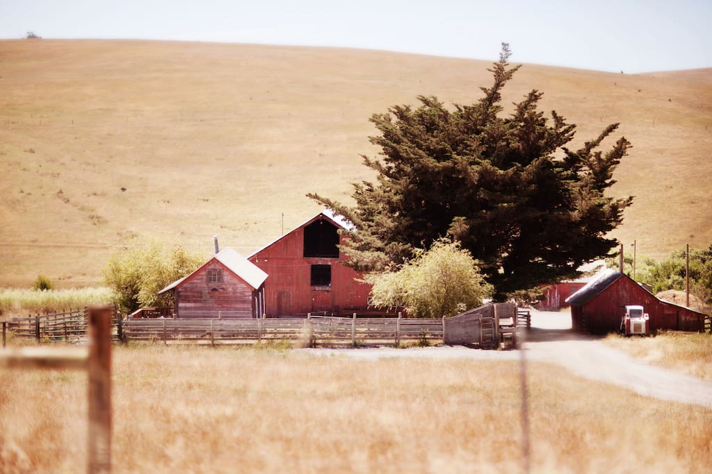 Stemple Creek Ranch is an organic cattle ranch in Tomales (Marin County). We raise and sell grass finished beef and lamb.  We have two small cabins and a farmhouse here on AirBnB.  We also have a barn and event space that we rent out for special events.