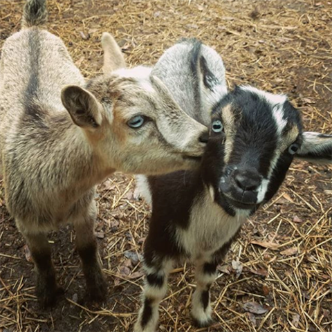 Goat House Farm Stay - The Coop