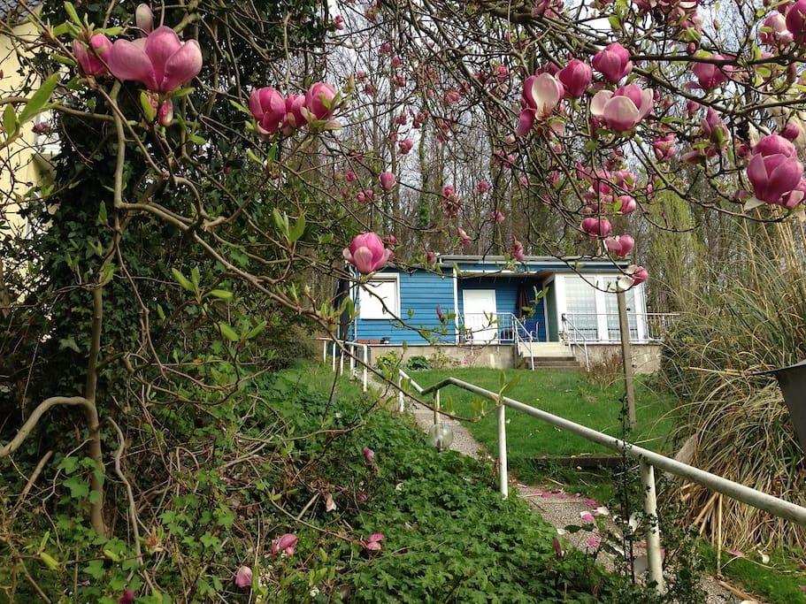 So sieht das kleine Ferienhaus im Frühjahr aus.