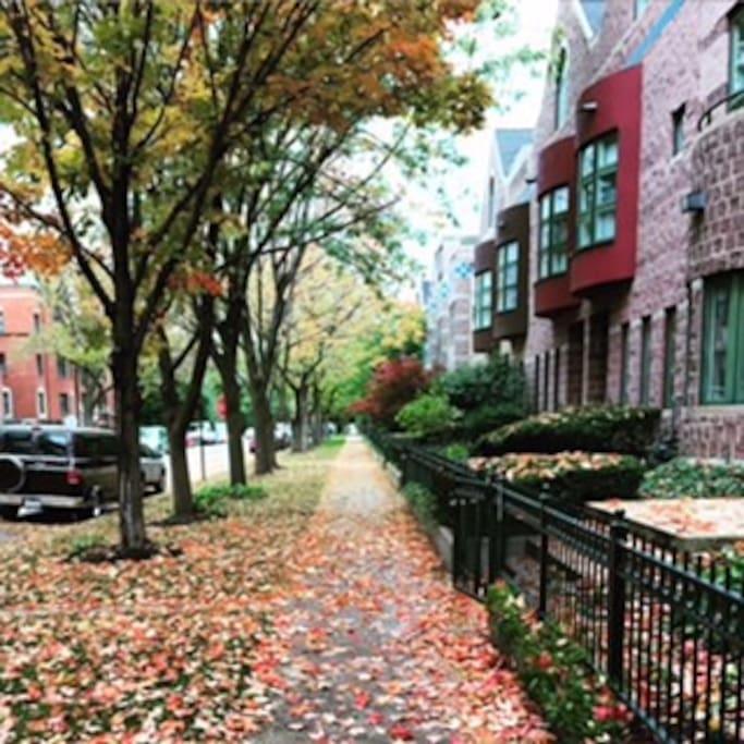 Fall day in the neighborhood.
