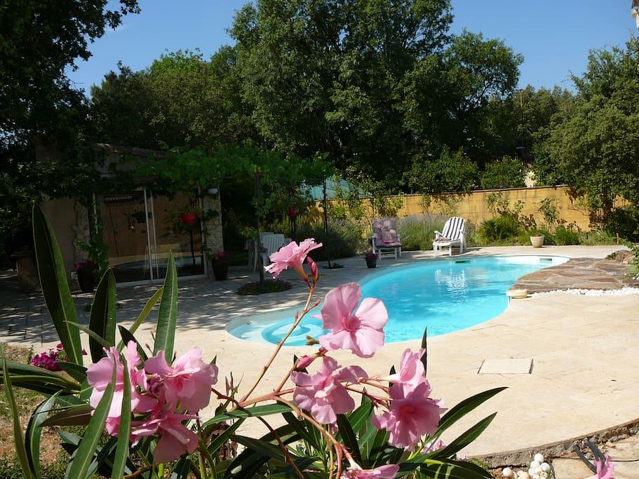 magnifique cabanon piscine jardin maisons louer. Black Bedroom Furniture Sets. Home Design Ideas