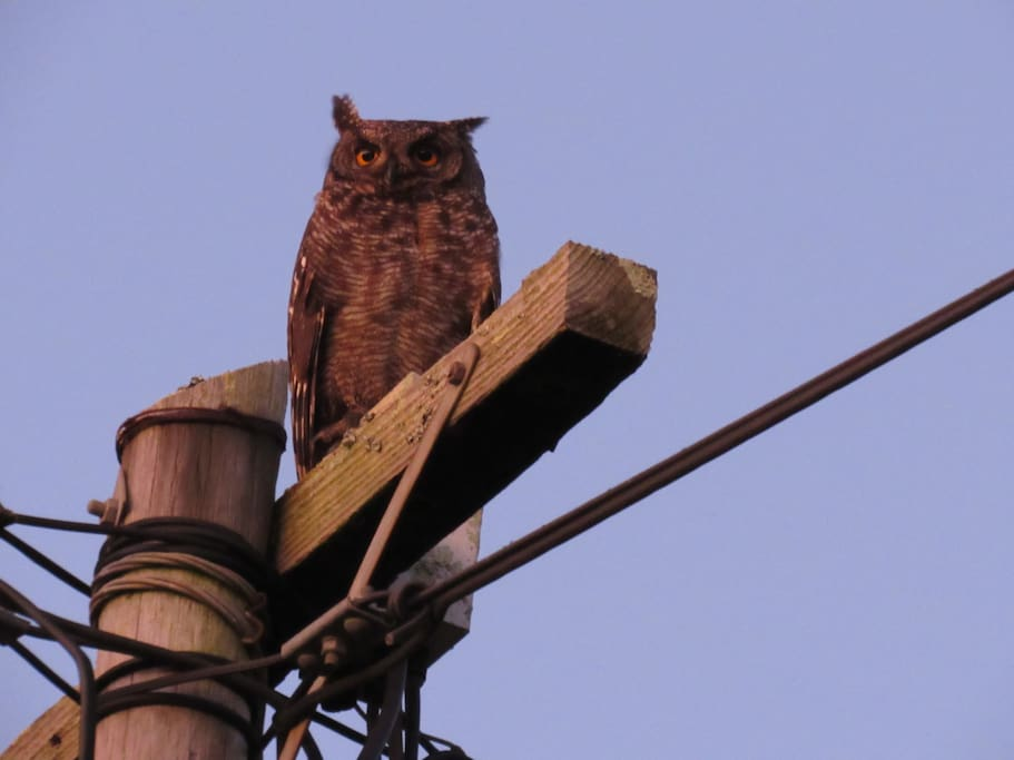 A regular local visitor