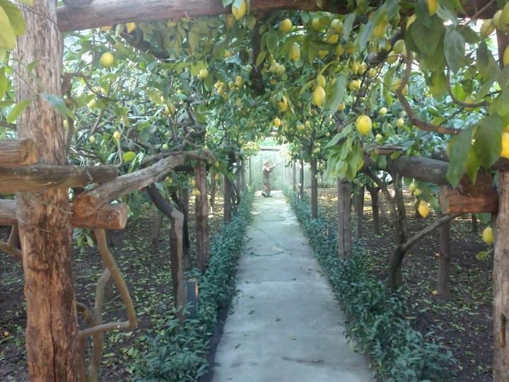 Anna's Lemon Garden