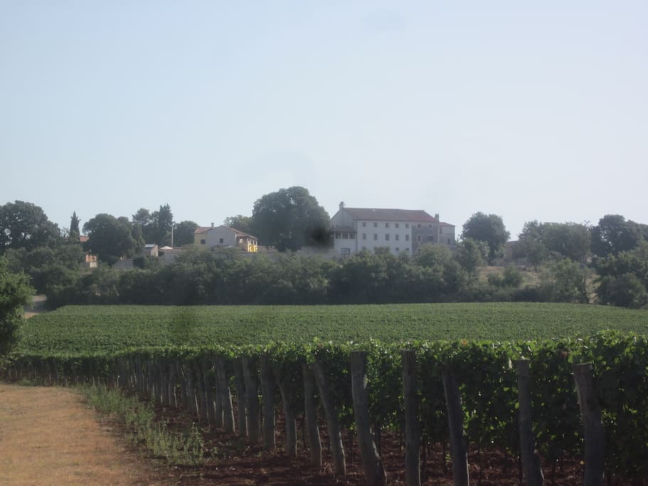 Estate from distance surrounded with vineyards