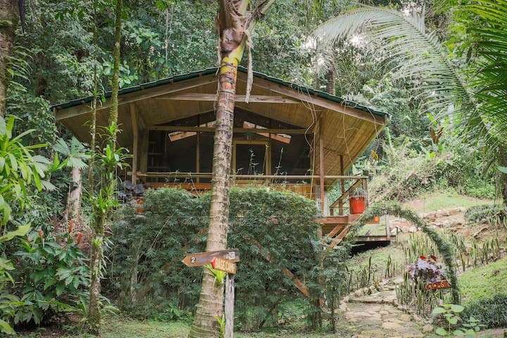 Unique & eco-friendly rental w/secluded atmosphere in the heart of the jungle!