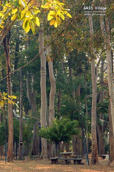 ไม้ใหญ่ ร่มครึ้ม ภายใน กุลา ฟาร์ม สเตย์