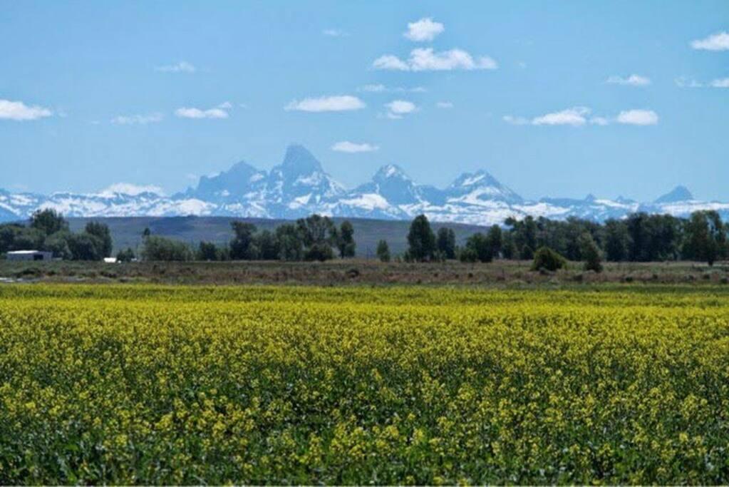 Teton Views out Windows