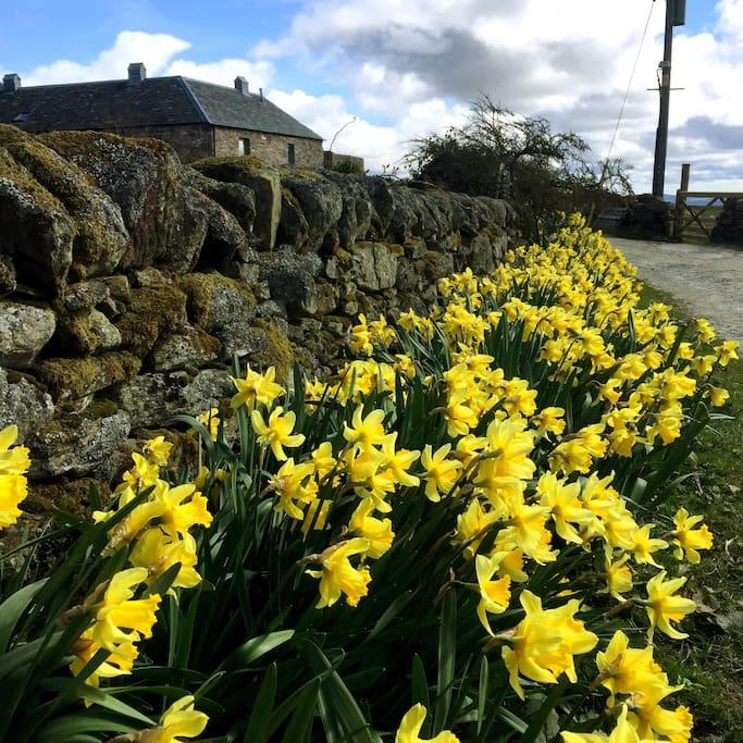 Spring at Burmieston