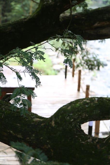 杭州民宿,若隐八品民宿,与千年香榧树为邻