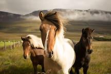 Hello from the Dartmoor ponies.