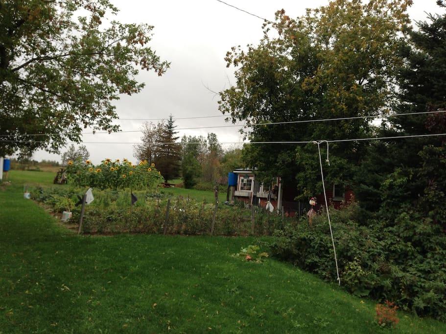 Stephen's garden