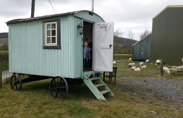 Glamping shepherds hut South Downs