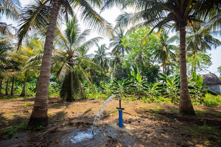 COCO Farms with waterways