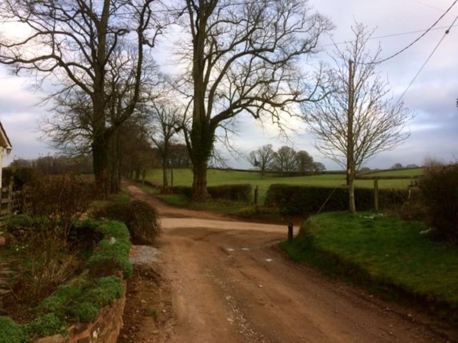 View from the house of lane leading to The Quantock Hills