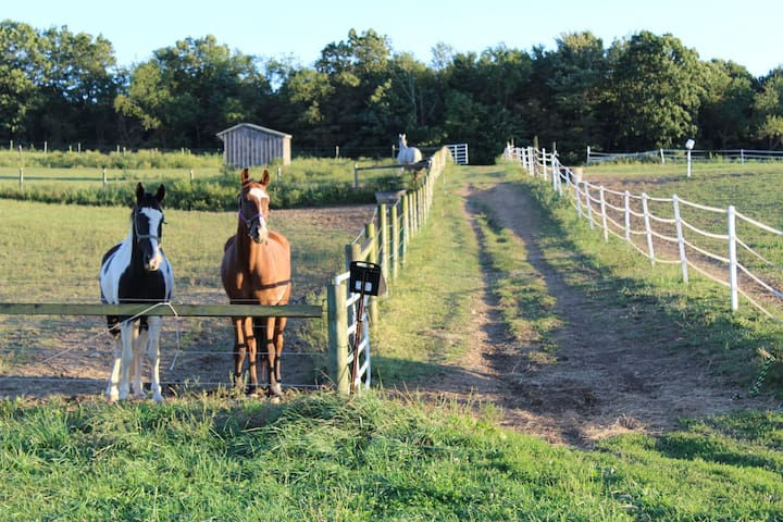 New Dawn Farms  Equine Boarding & Leasing Facility