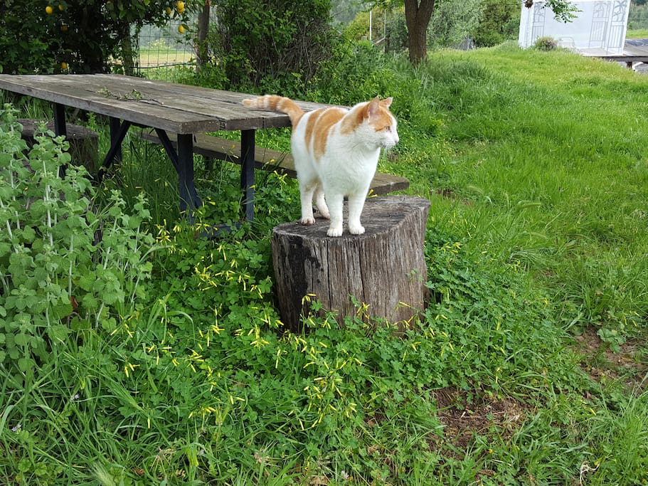 Ferocious Ranch Cat!  HA!  You'll never see him! Shady picnic area