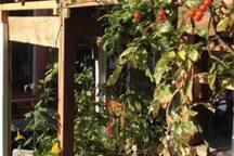 Potager bio et fruits / légumes à disposition :)