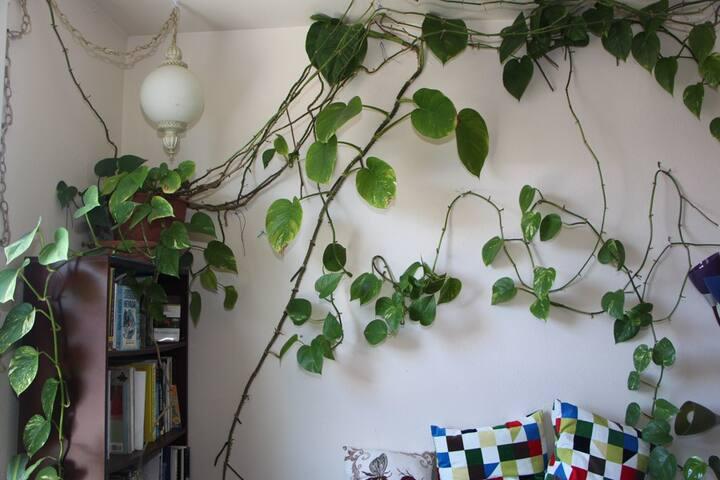 Amazing plant!